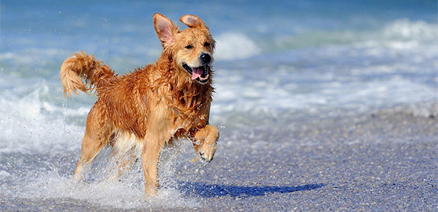 Spiagge per cani a Rimini: via libera ai tuffi in mare